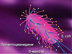 eserihia-coli-web